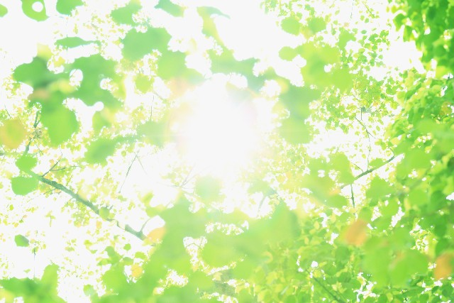 緑のイメージ画像
